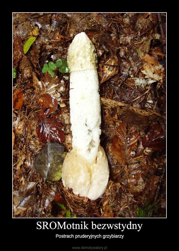 SROMotnik bezwstydny – Postrach pruderyjnych grzybiarzy