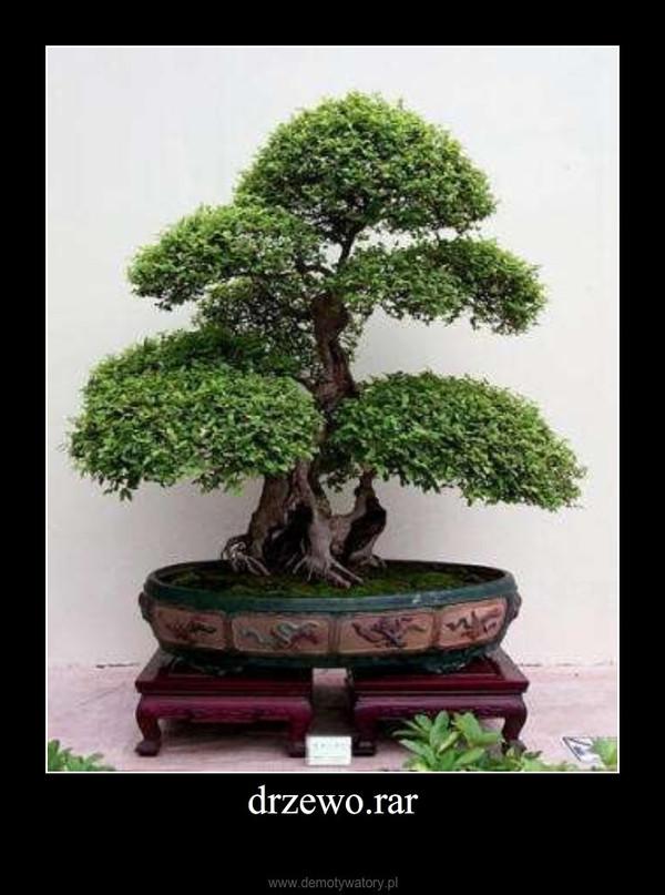 drzewo.rar –
