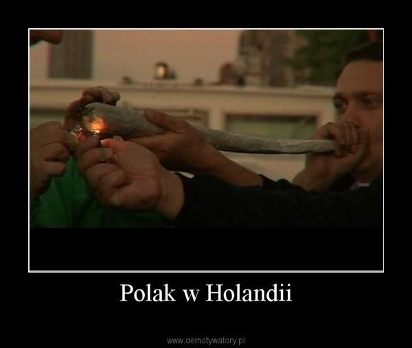 Polak w Holandii –