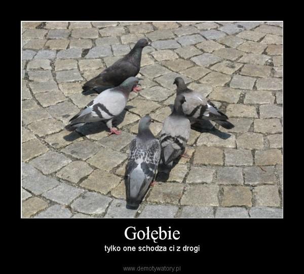 Gołębie – tylko one schodza ci z drogi