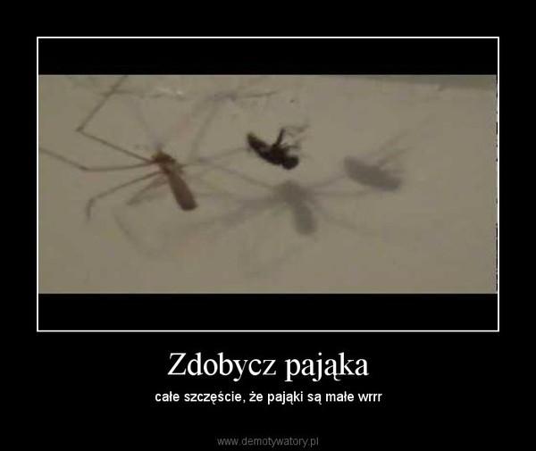 Zdobycz pająka – całe szczęście, że pająki są małe wrrr