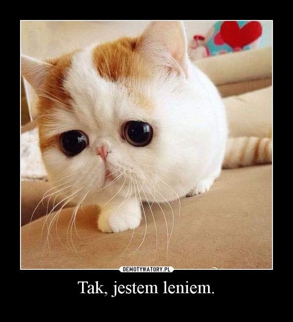 Tak, jestem leniem. –