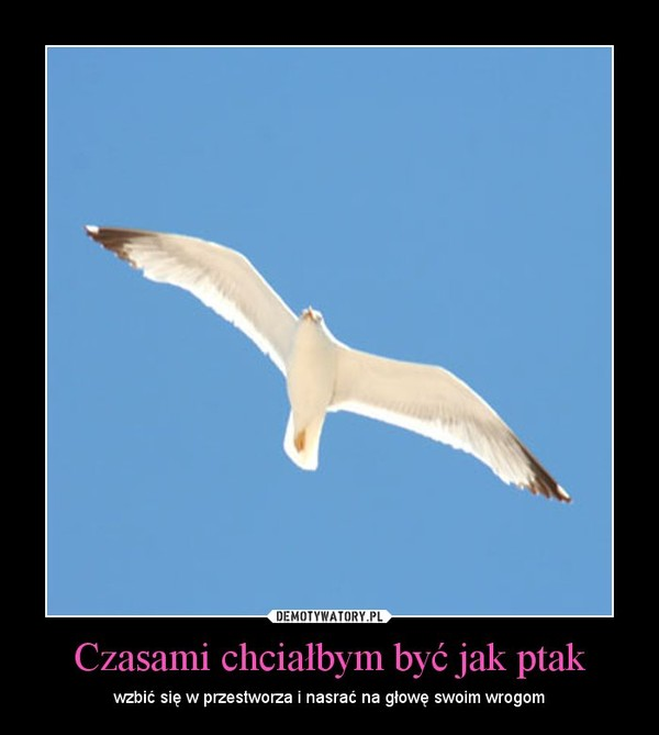 Czasami chciałbym być jak ptak – wzbić się w przestworza i nasrać na głowę swoim wrogom