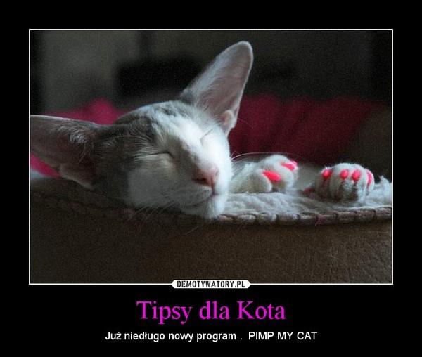 Tipsy dla Kota – Już niedługo nowy program .  PIMP MY CAT