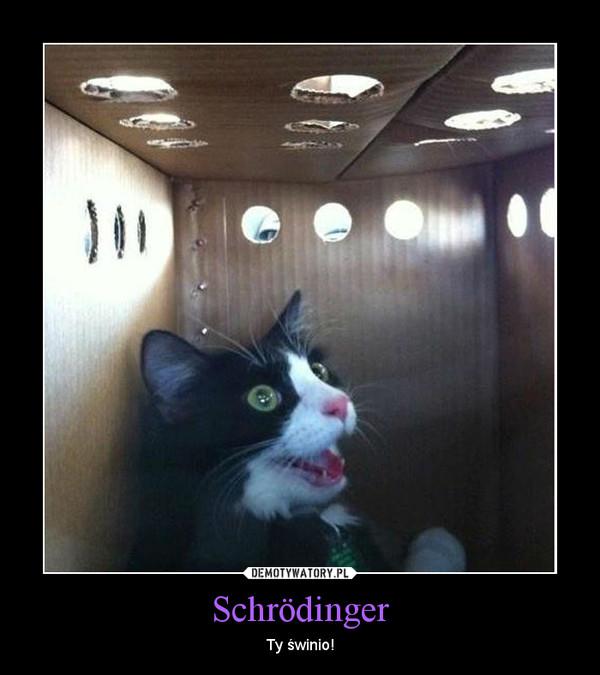 Schrödinger – Ty świnio!