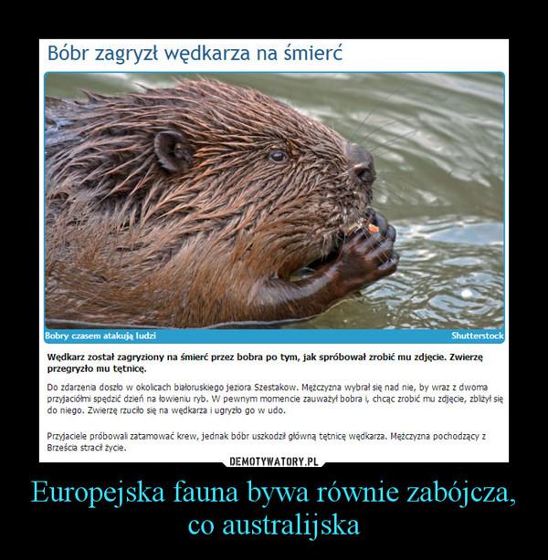 Europejska fauna bywa równie zabójcza, co australijska –
