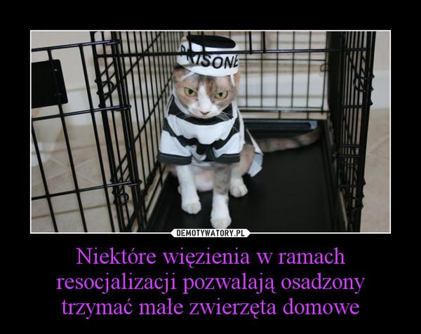 Niektóre więzienia w ramach resocjalizacji pozwalają osadzony trzymać małe zwierzęta domowe –
