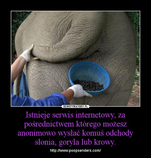 Istnieje serwis internetowy, za pośrednictwem którego możesz anonimowo wysłać komuś odchody słonia, goryla lub krowy. – http://www.poopsenders.com/