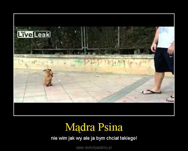 Mądra Psina – nie wim jak wy ale ja bym chciał takiego!