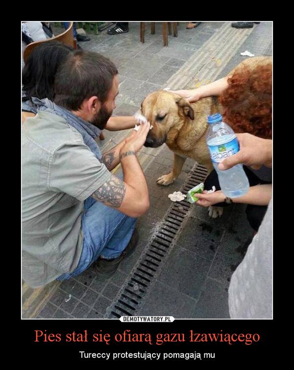 Pies stał się ofiarą gazu łzawiącego – Tureccy protestujący pomagają mu