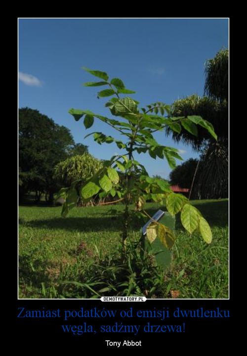 Zamiast podatków od emisji dwutlenku węgla, sadźmy drzewa!