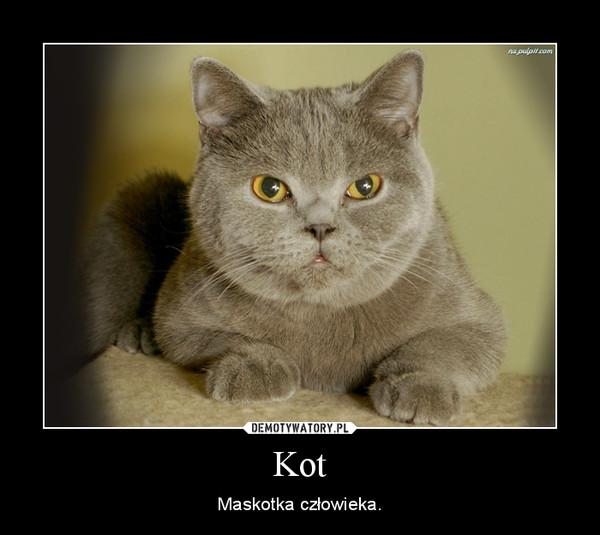 Kot – Maskotka człowieka.