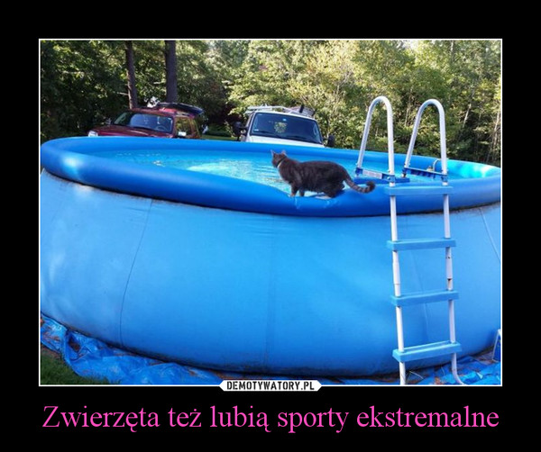 Zwierzęta też lubią sporty ekstremalne –