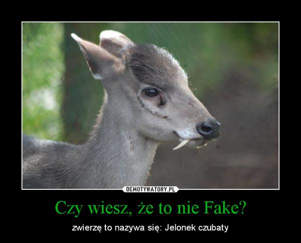 Czy wiesz, że to nie Fake? – zwierzę to nazywa się: Jelonek czubaty