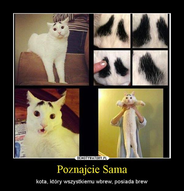 Poznajcie Sama – kota, który wszystkiemu wbrew, posiada brew