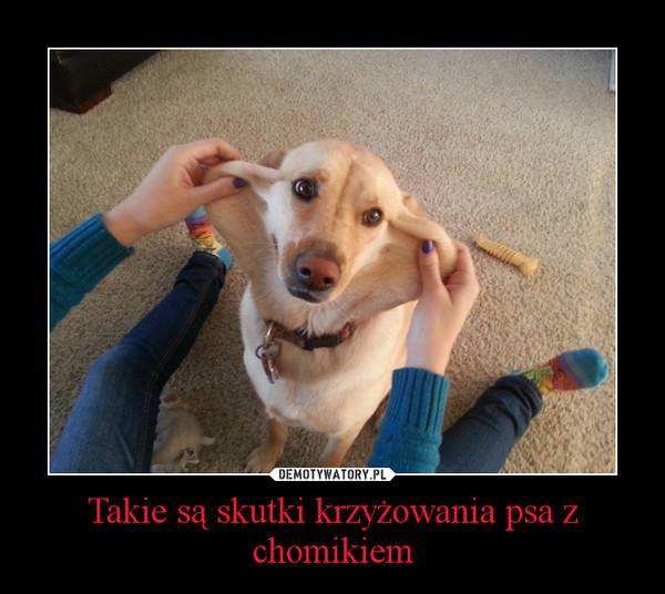 Takie są skutki krzyżowania psa z chomikiem –