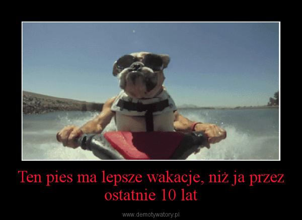Ten pies ma lepsze wakacje, niż ja przez ostatnie 10 lat –