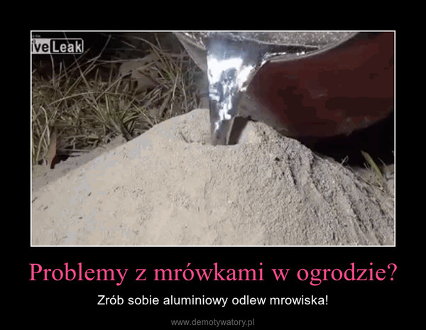 Problemy z mrówkami w ogrodzie? – Zrób sobie aluminiowy odlew mrowiska!