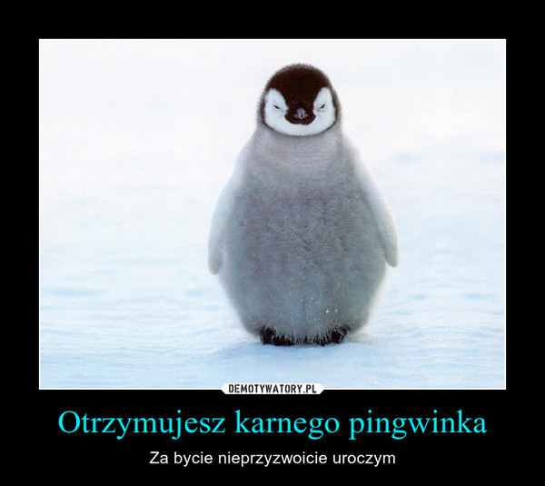 Otrzymujesz karnego pingwinka – Za bycie nieprzyzwoicie uroczym