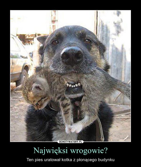 Najwięksi wrogowie? – Ten pies uratował kotka z płonącego budynku