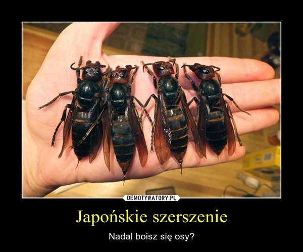 Japońskie szerszenie – Nadal boisz się osy?