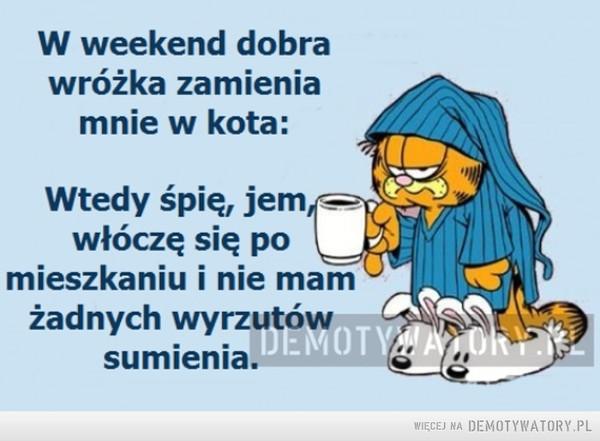 W weekend zamieniam się w kota –