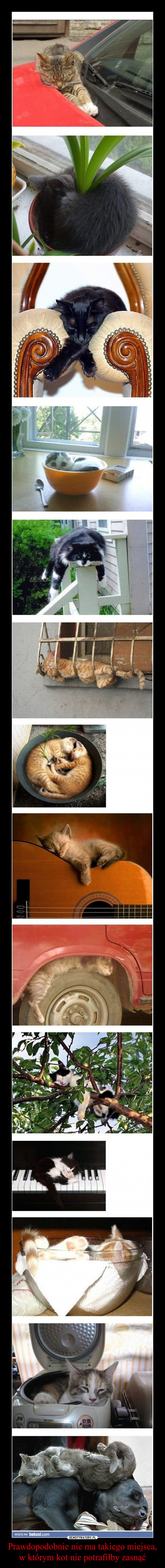 Prawdopodobnie nie ma takiego miejsca, w którym kot nie potrafiłby zasnąć –