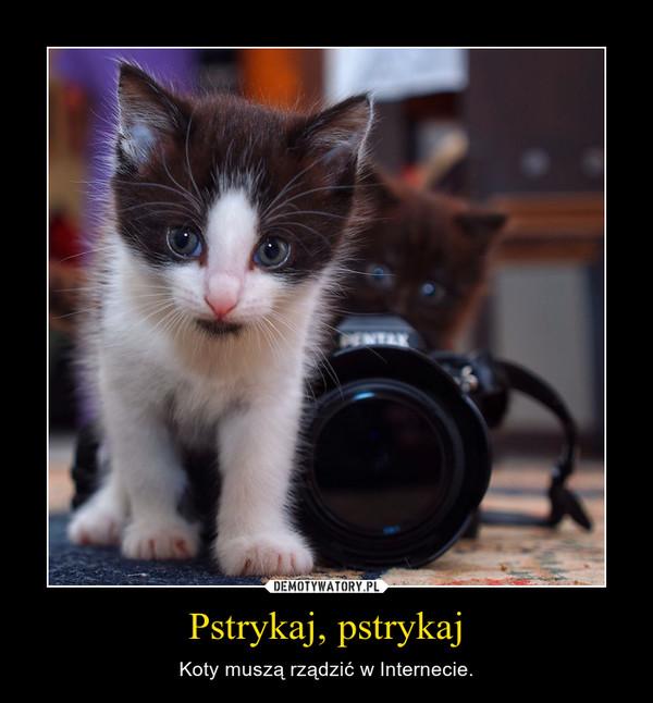 Pstrykaj, pstrykaj – Koty muszą rządzić w Internecie.