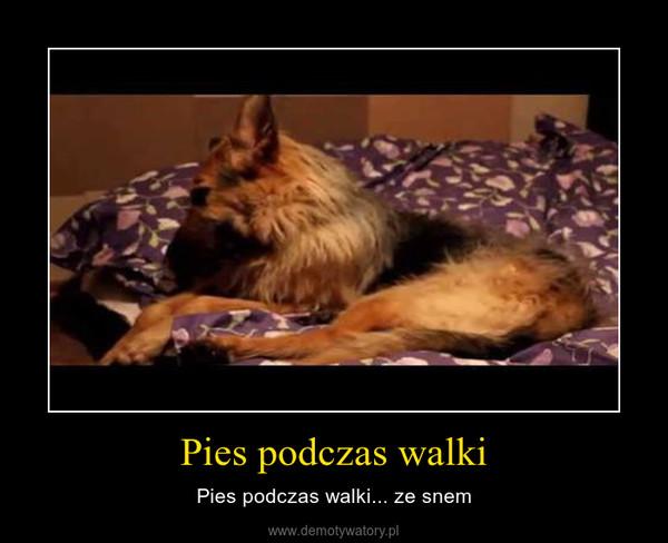 Pies podczas walki – Pies podczas walki... ze snem