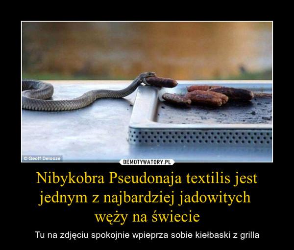 Nibykobra Pseudonaja textilis jest jednym z najbardziej jadowitych węży na świecie – Tu na zdjęciu spokojnie wpieprza sobie kiełbaski z grilla