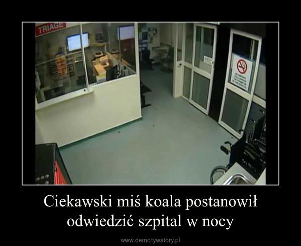 Ciekawski miś koala postanowił odwiedzić szpital w nocy –