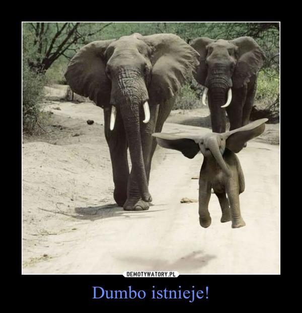 Dumbo istnieje! –