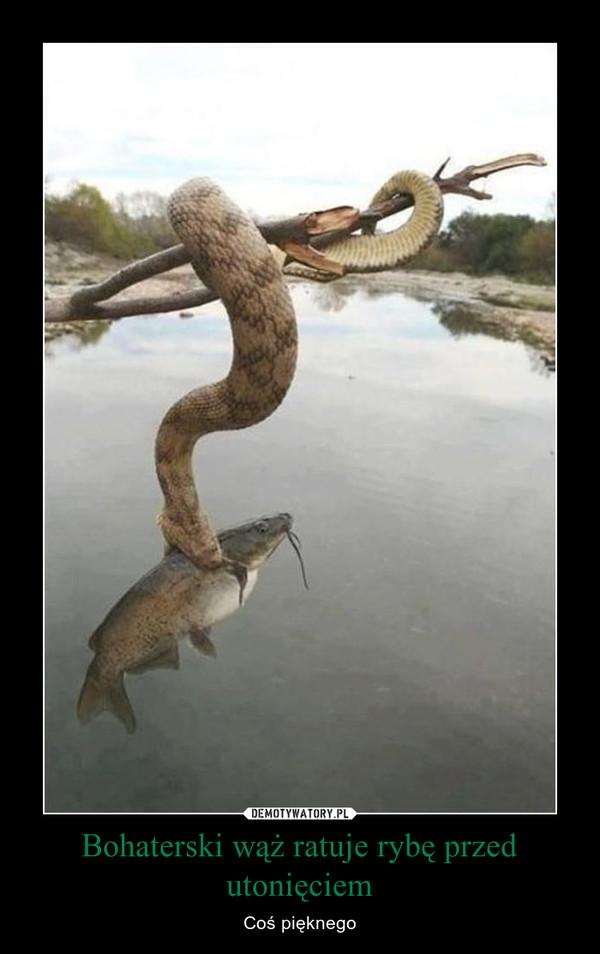 Bohaterski wąż ratuje rybę przed utonięciem – Coś pięknego