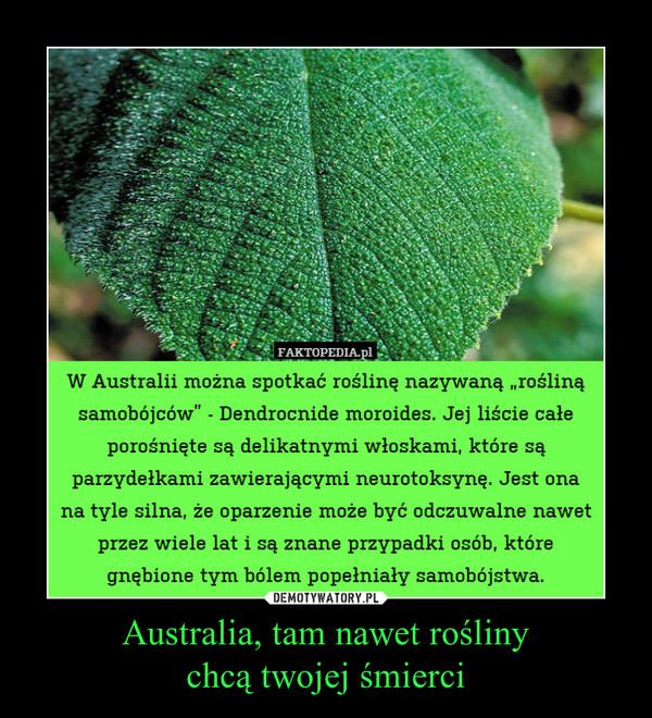 Australia, tam nawet roślinychcą twojej śmierci –