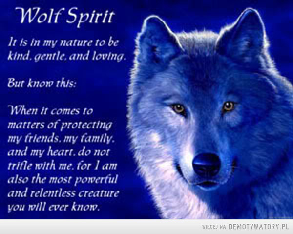 A spirit of the wolf –