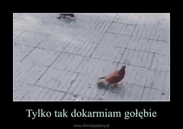 Tylko tak dokarmiam gołębie –