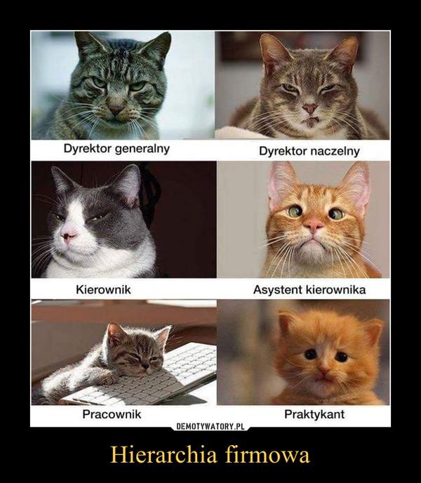 Hierarchia firmowa –