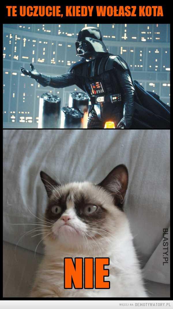 Koty taki są –