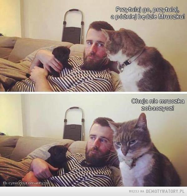 Nie zdradzaj kota, bo pożałujesz –