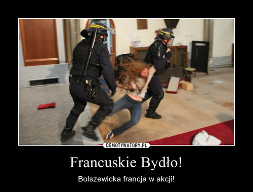 Francuskie Bydło!