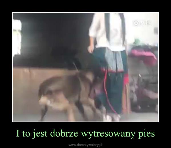 I to jest dobrze wytresowany pies –