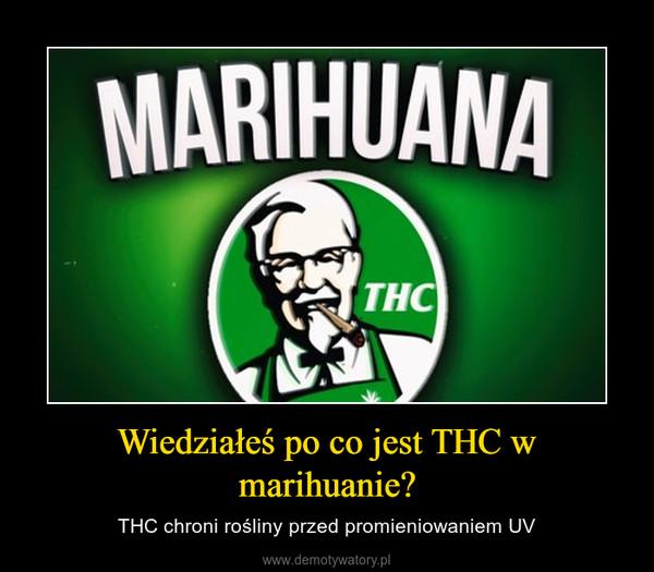 Wiedziałeś po co jest THC w marihuanie? – THC chroni rośliny przed promieniowaniem UV
