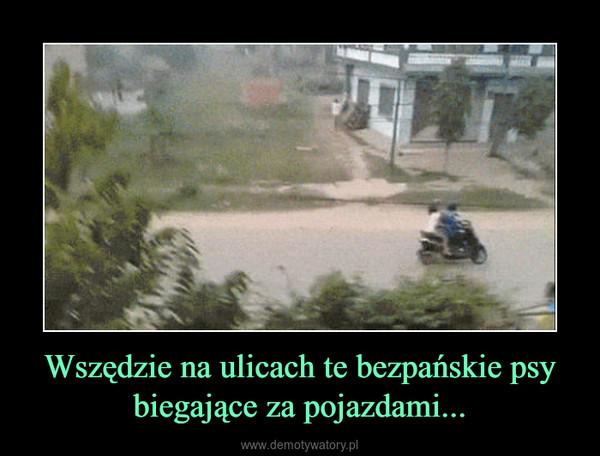 Wszędzie na ulicach te bezpańskie psy biegające za pojazdami... –