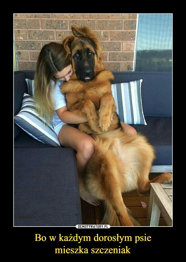 Bo w każdym dorosłym psiemieszka szczeniak –