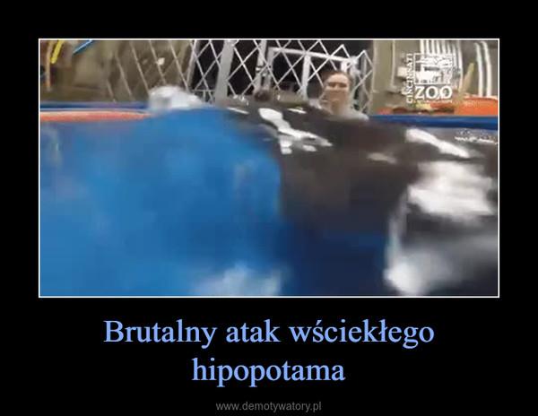 Brutalny atak wściekłego hipopotama –
