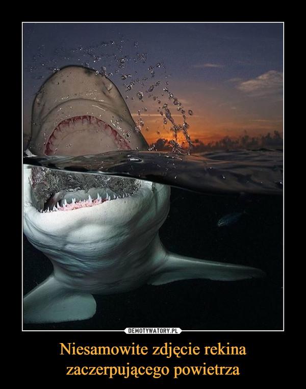 Niesamowite zdjęcie rekinazaczerpującego powietrza –