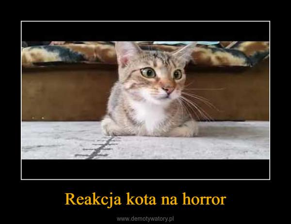 Reakcja kota na horror –