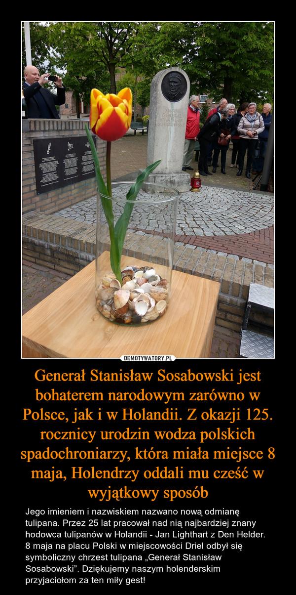 """Generał Stanisław Sosabowski jest bohaterem narodowym zarówno w Polsce, jak i w Holandii. Z okazji 125. rocznicy urodzin wodza polskich spadochroniarzy, która miała miejsce 8 maja, Holendrzy oddali mu cześć w wyjątkowy sposób – Jego imieniem i nazwiskiem nazwano nową odmianę tulipana. Przez 25 lat pracował nad nią najbardziej znany hodowca tulipanów w Holandii - Jan Lighthart z Den Helder. 8 maja na placu Polski w miejscowości Driel odbył się symboliczny chrzest tulipana """"Generał Stanisław Sosabowski"""". Dziękujemy naszym holenderskim przyjaciołom za ten miły gest!"""