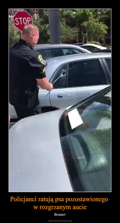 Policjanci ratują psa pozostawionego w rozgrzanym aucie – Brawo!