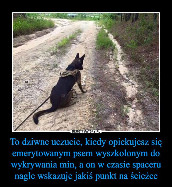 To dziwne uczucie, kiedy opiekujesz się emerytowanym psem wyszkolonym do wykrywania min, a on w czasie spaceru nagle wskazuje jakiś punkt na ścieżce –